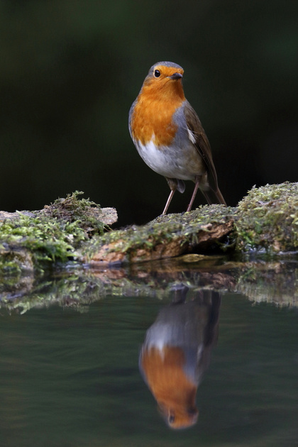 Robin reflection