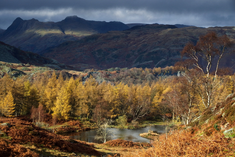 Langdale Pikes from Holme Fell 2