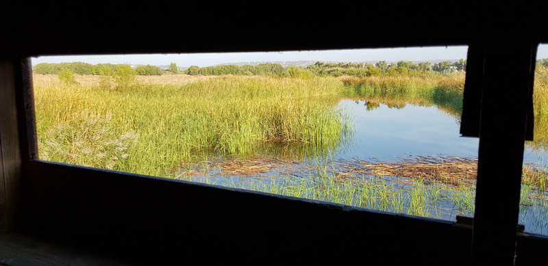 View from Bird Hide 2