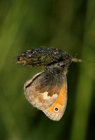 Small Heath #6