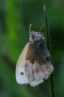 Small Heath #2